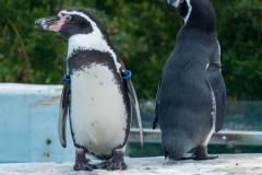 2 Pinguine