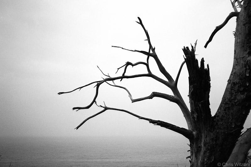 Baum am Küstenweg