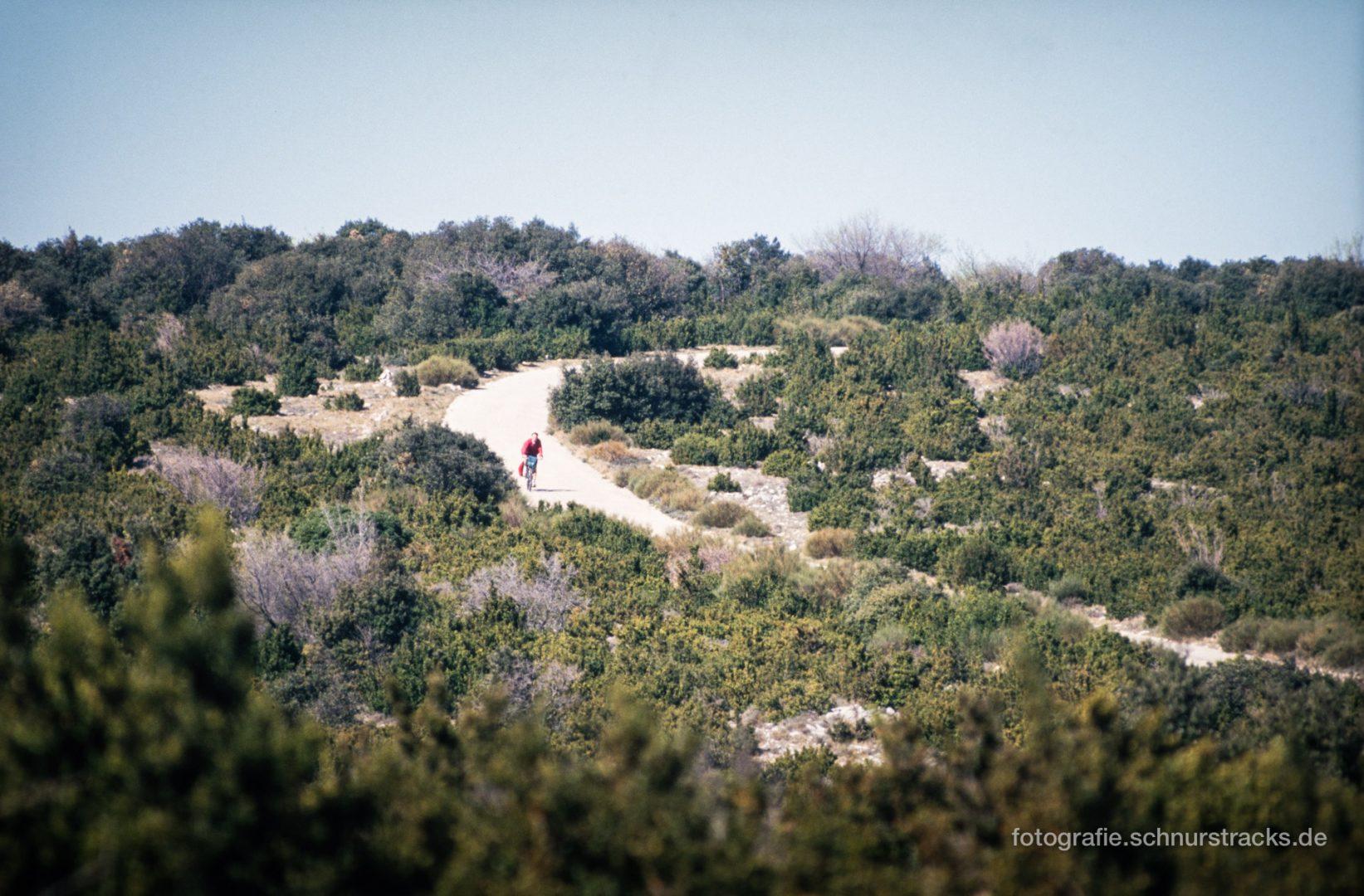 Foret des cedres Bonnieux - Provence