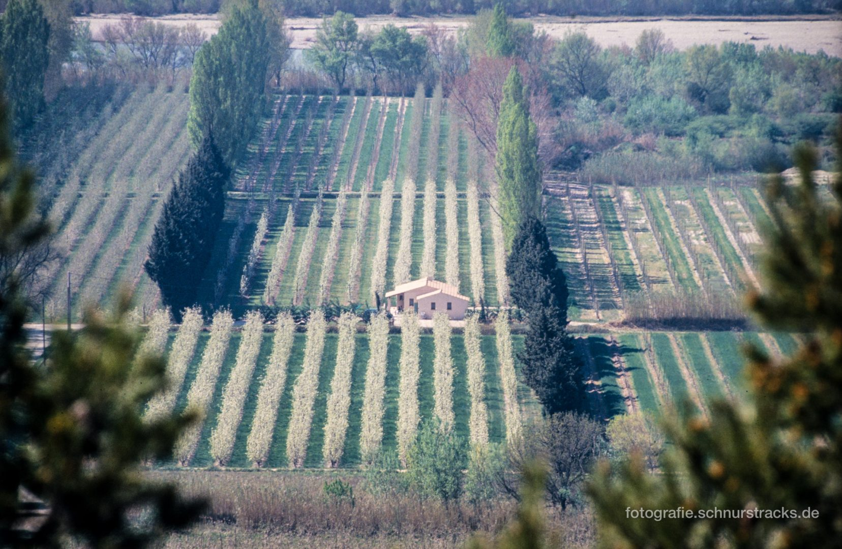 Provence - Obstanbau an der Durance bei Cavaillon #0641