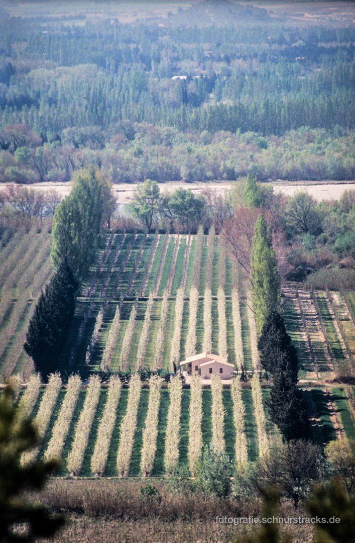 Provence - Obstanbau an der Durance bei Cavaillon #0642