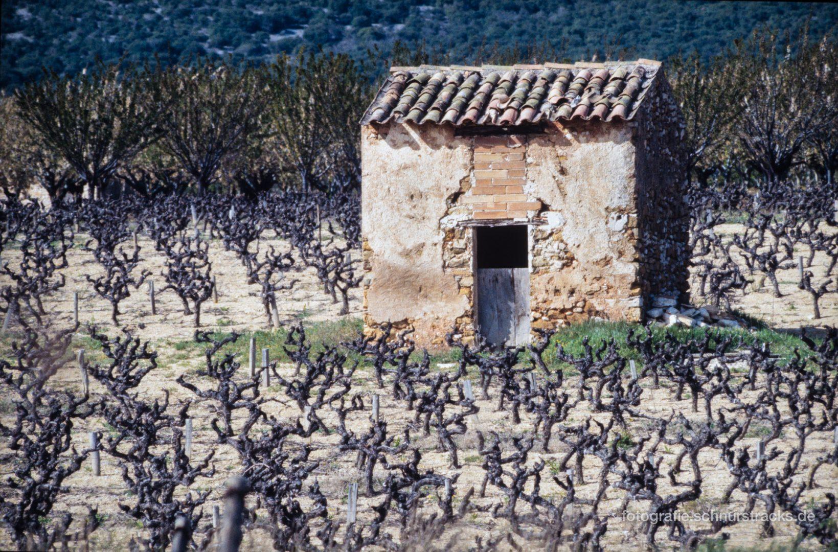 Hütte umgeben von Weinstöcken im Luberon #0806