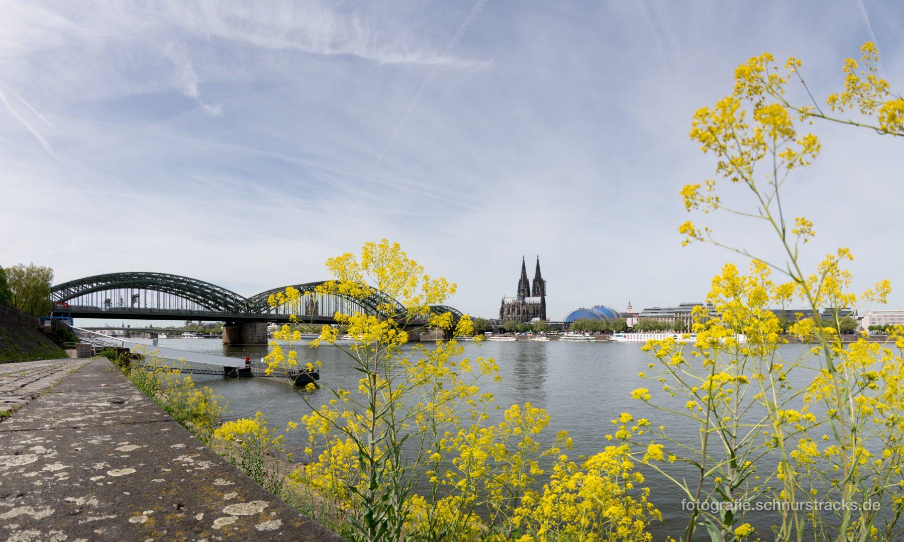 Frühlingshaftes Kölner Rheinufer #1591