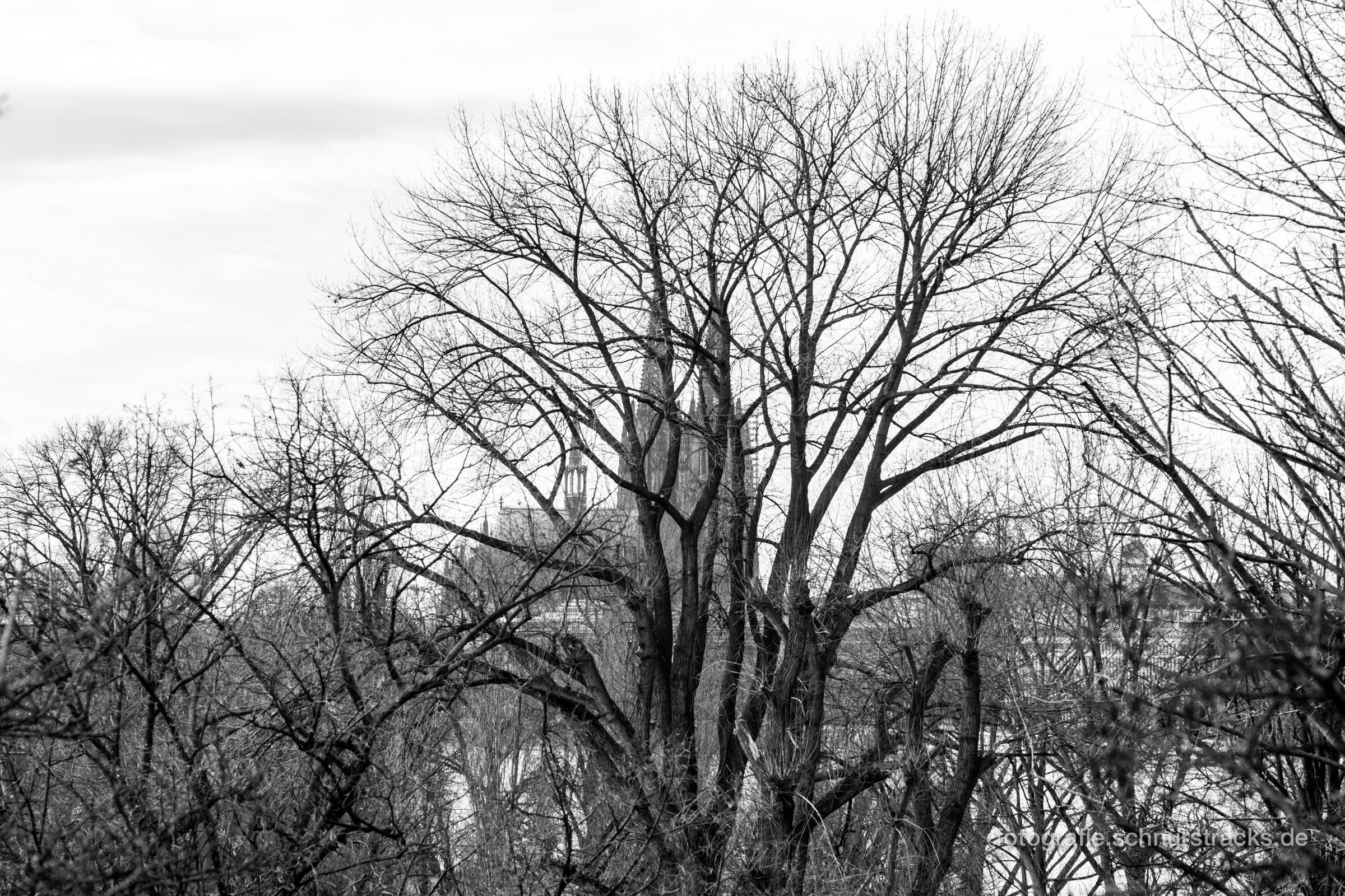 Kölner Dom hinter Bäumen des Rheinpark