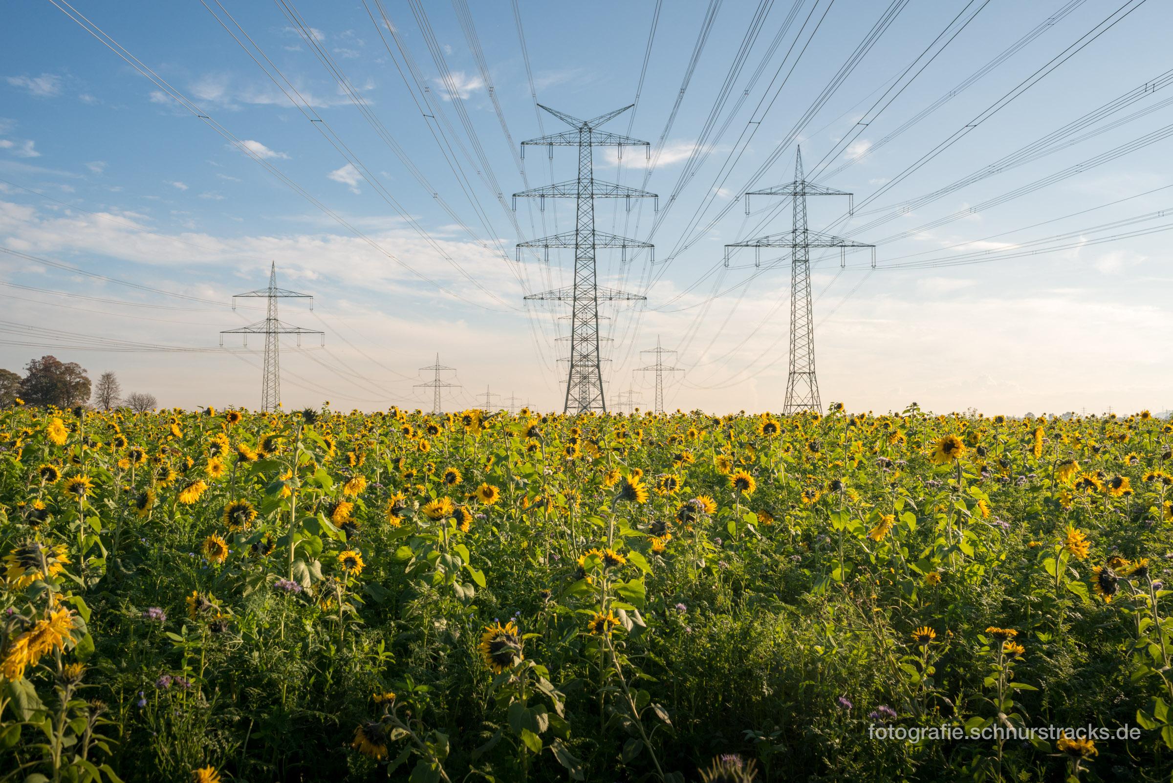 Freileitungen über Sonnenblumenfeld