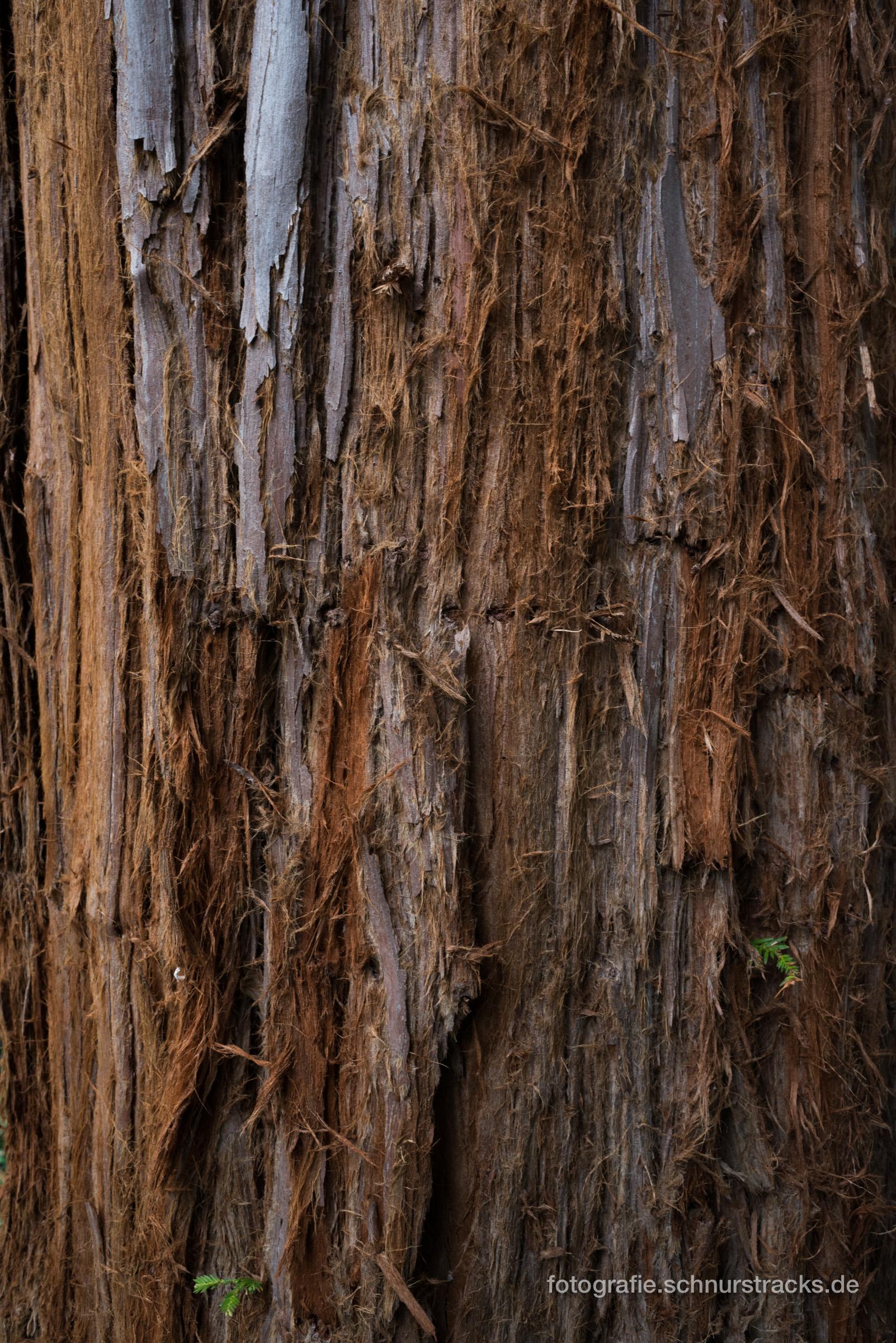Mammutbaum Rinde